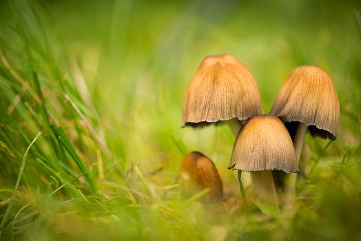 Pilze am Waldrand