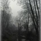 Nebel am Bach
