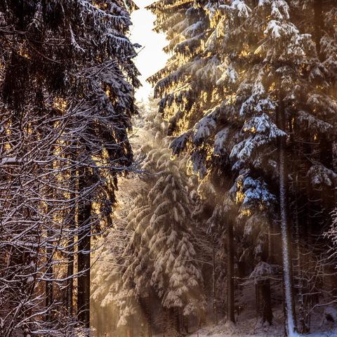 Winter- Wonderland