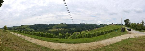 Weinberge in Slowenien