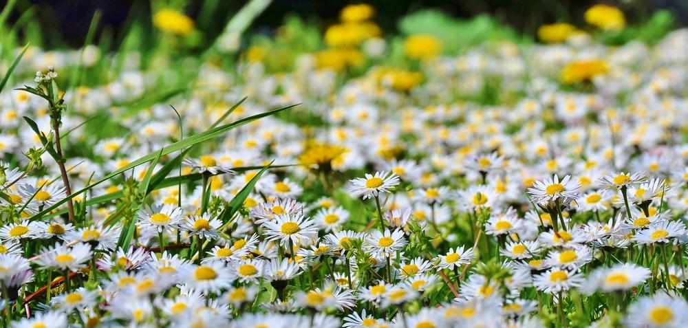 Blumenwiese...