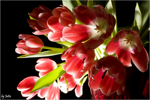 meine Lieblingsblumen