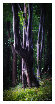 Dark Tree MF Analog