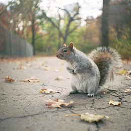 Begegnung im Central Park