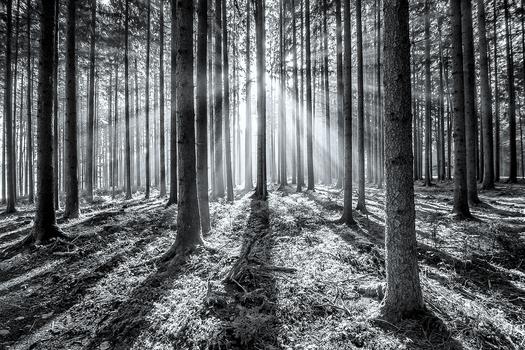 Licht & Schatten..
