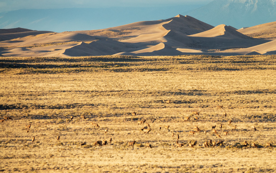Great Sand Dunes National Park III