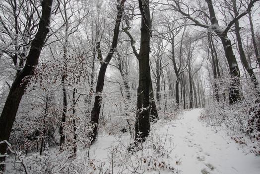 Spuren im Schnee......