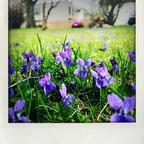 trotz Allem : Frühling !!!