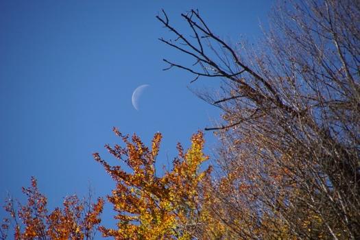 Mond im Wildnisgebiet Dürrenstein