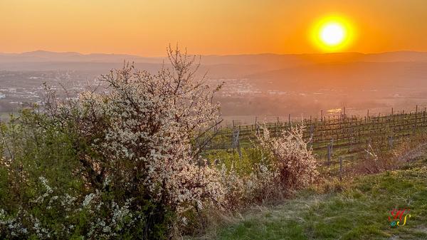 Sonnenuntergang über Langenlois Niederösterreich