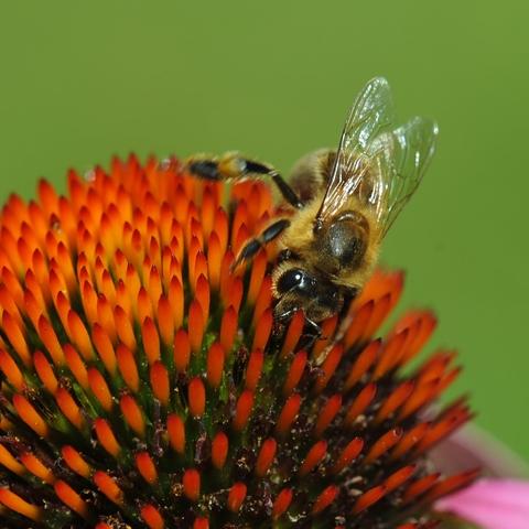 Aus der Tiefe kommt der Honig ;-)