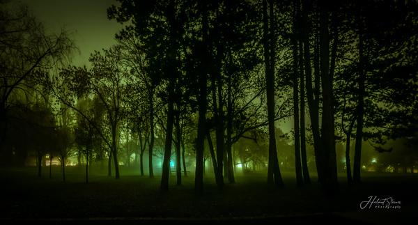 Mystischer Wald