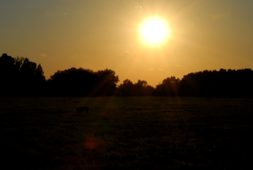 Sonnenuntergang über der Heide