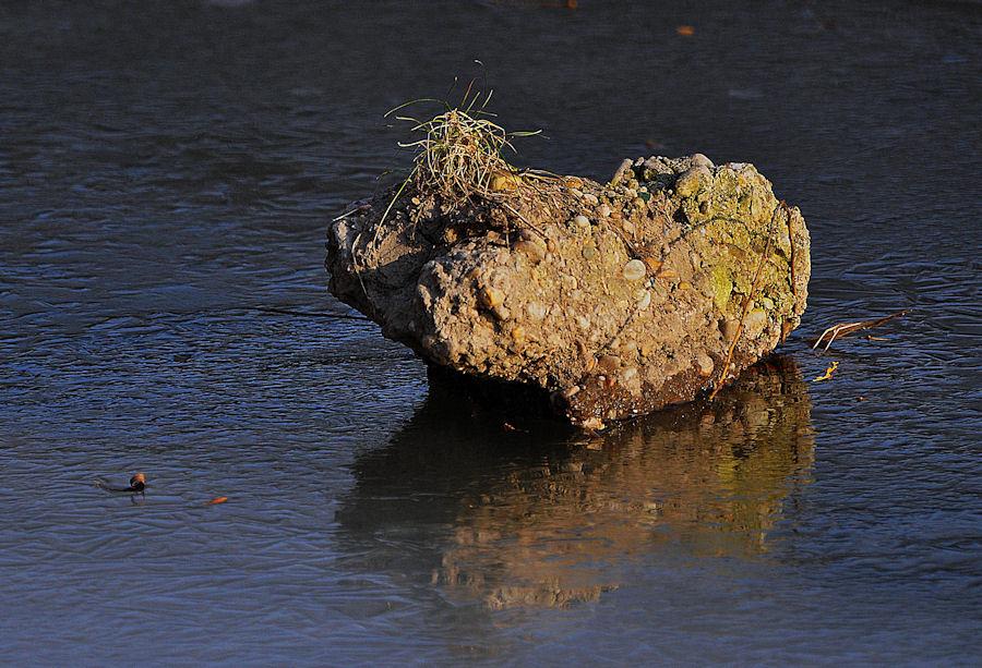 """""""Etwas"""" im Wasser"""