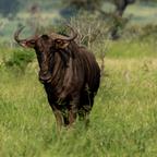 Kruger Park 2020