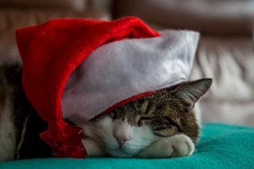 Erhohlsame Weihnachten