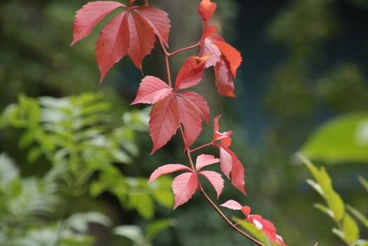 Herbstzeit :-)