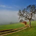 an der Nebelgrenze 4