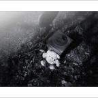 FriedhofDerNamenlosen(2)