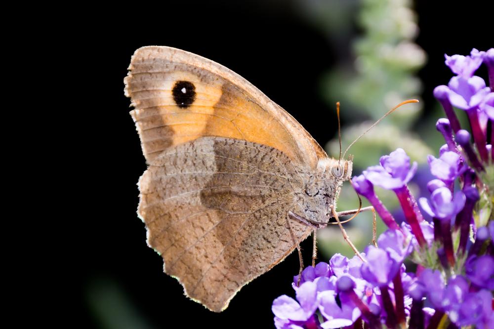 butterfly_b3