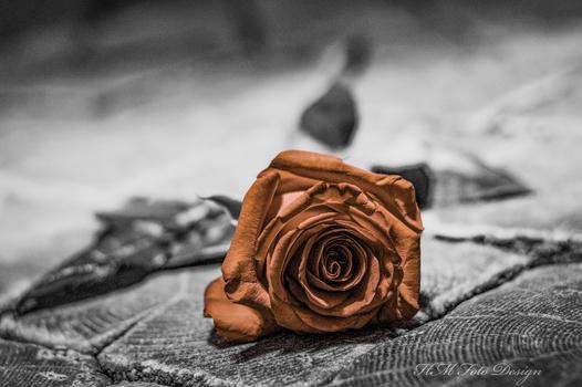 Retro Rose