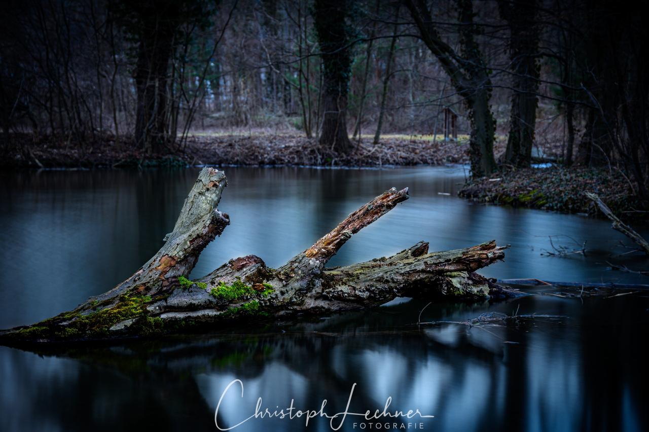 Die Stille der Natur