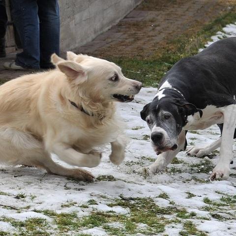 Lara und Mexx beim spielen