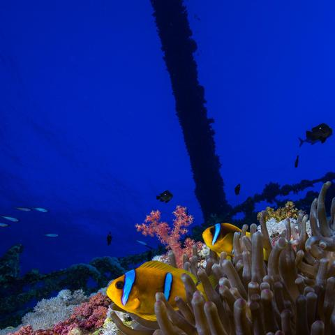Nemo vor dem Wrack