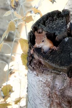 Eichhörnchen Schnappschuss