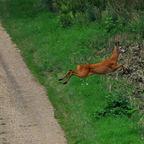 """""""Bambi"""" unterwegs 2"""