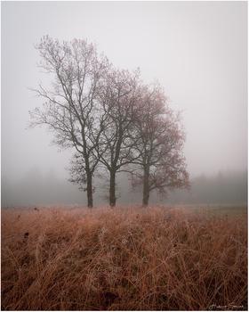 November Silence II