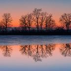 Lieblingsbaumreihe nach Sonnenuntergang