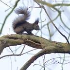 Eichhörnchen im Garten...