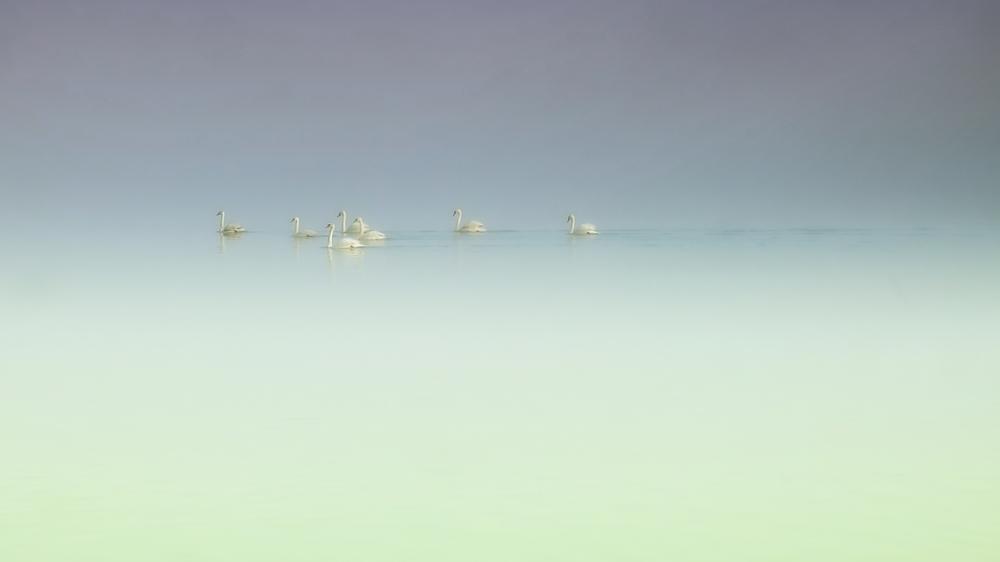 """""""Schwäne im Nebel"""""""
