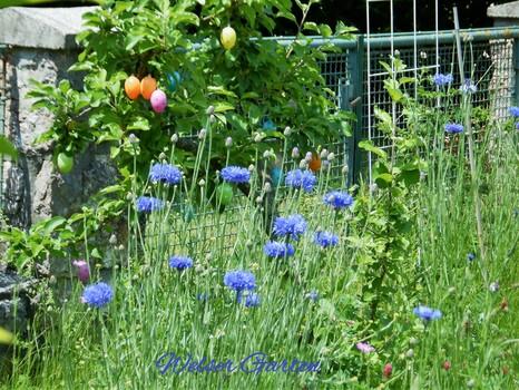 Welser Garten