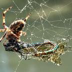 Ende eine Libelle 2