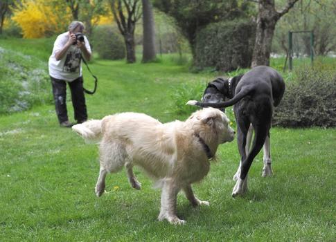 Spielende Hunde und ein Fotograf :-)
