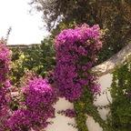 Südliche Blumenpracht