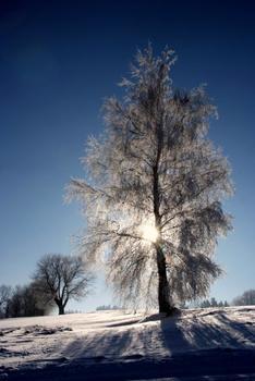 Baum mit Rauhreif