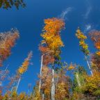 wenn der Herbst in den Himmel wächst