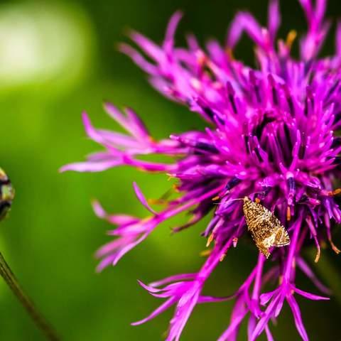 noch ein Schmetterling und noch eine Blume