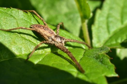 Spinne am Blatt