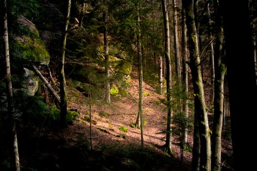 Lichtspot im Wald