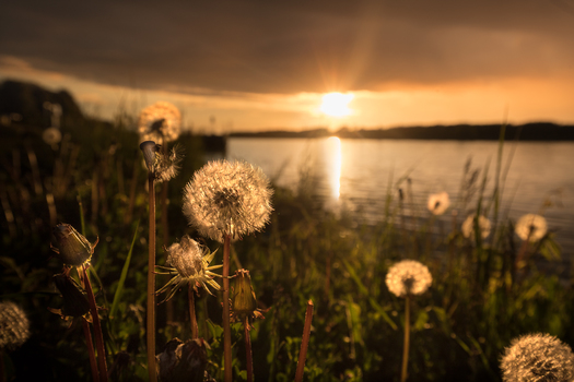 Sonnenuntergang in der Wiese