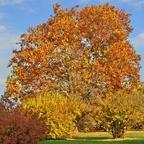 ...bronze-goldener Herbst...