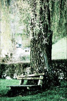 Unter der Weide