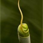 Botanik - Art