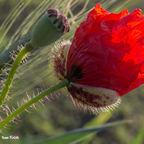 Geburt eine Blume