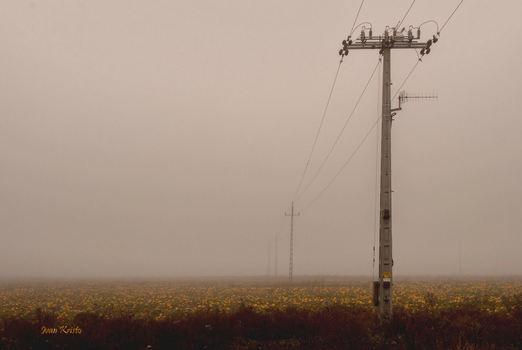 Kürbiskern Feld im Nebel