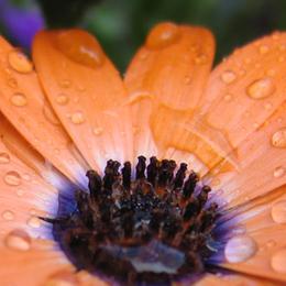 Wiedermal ne Blume